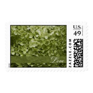 Amor floral del boda del Hydrangea verde de Sellos Postales