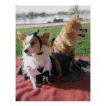 Amor internacional de los perros lindos vestidos t membretes personalizados