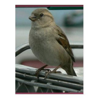 Amor levantado Pájaro del carro Tarjetas Postales