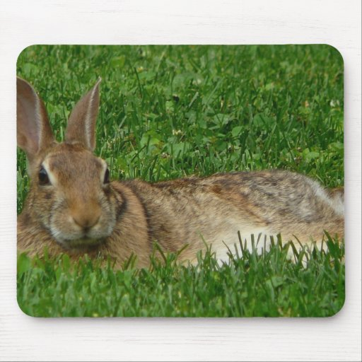 Amor Mousepad del conejo Tapete De Raton