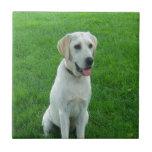 amor que espera del perro blanco de Labrador para Azulejos