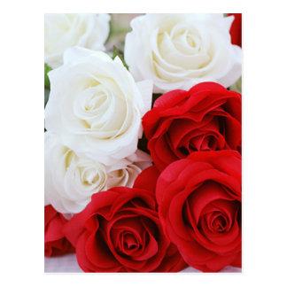 amor rojo blanco de la flor color de rosa de las tarjeta postal