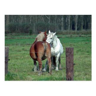 Amor, romance: Foto pesada belga de 2 caballos Postal