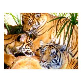 Amor siempre Tigers_ Tarjetas Postales