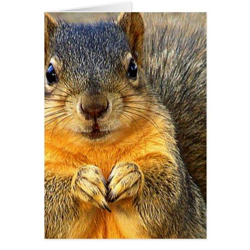 Amor Squirrel_ Felicitación