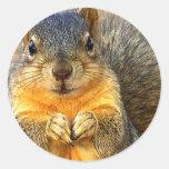 Amor Squirrel_ Pegatina Redonda