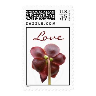 Amor Timbre Postal