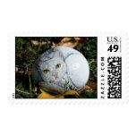 """Amorey"" cat rock stamp"