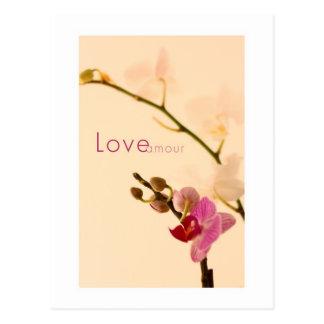 Amorío del amor de la orquídea postales