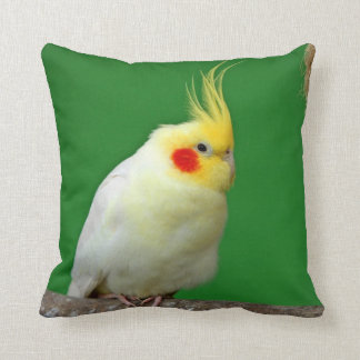 Amortiguador hermoso de la foto del pájaro del Coc