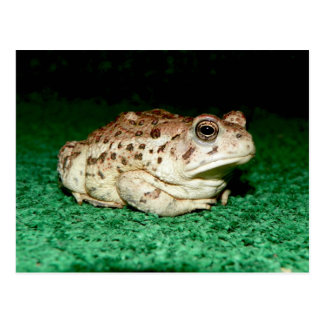 Amphibian In Maricopa County *Julius* Postcard