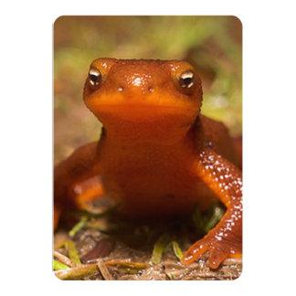 Amphibian Oregon Corvallis Reptile Card
