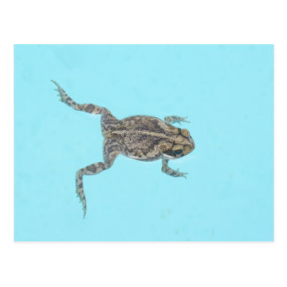 Amphibian Postcard 02