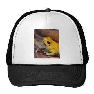 Amphibian Themed Trucker Hat