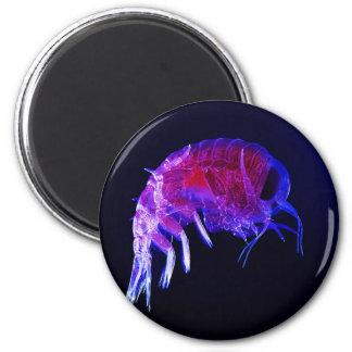 Amphipod Hyperiidae Hyperia Macrocephala 2 Inch Round Magnet
