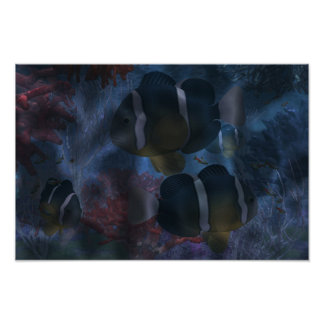 Amphiprion Clarkii2 Poster
