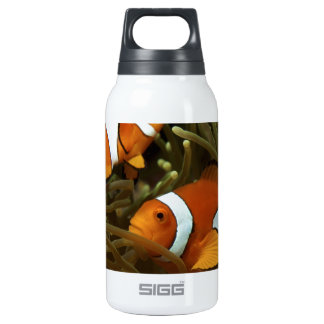 Amphiprion ocellaris Clown anemonefish Insulated Water Bottle