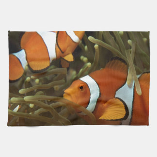 Amphiprion ocellaris Clown anemonefish Kitchen Towel