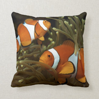 Amphiprion ocellaris Clown anemonefish Pillows
