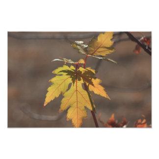 Ampliación de la foto de color de la caída cojinete