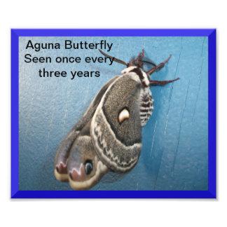 Ampliación de la foto de la mariposa de Aguna