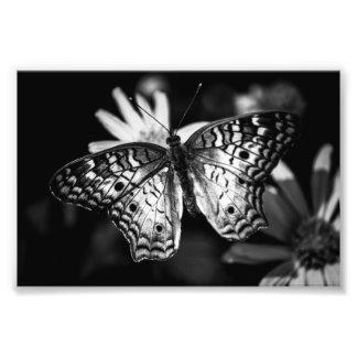Ampliación de la foto de la mariposa fotografía