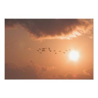 Ampliación de la foto del vuelo del amanecer cojinete