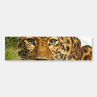 Amur Leopard Bumper Sticker