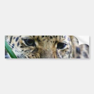 Amur Leopard  Bumper Stickers
