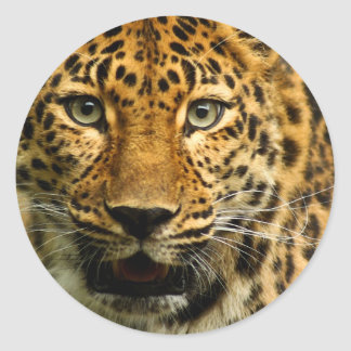 Amur Leopard Classic Round Sticker