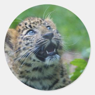 Amur Leopard Cub Classic Round Sticker