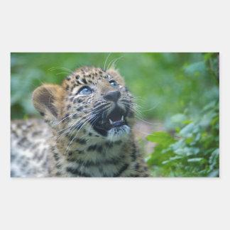 Amur Leopard Cub Rectangular Sticker