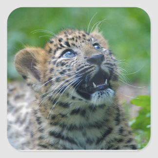 Amur Leopard Cub Square Sticker