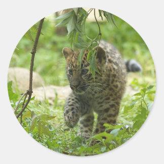 Amur Leopard Cub Round Sticker