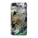 Amur Leopard iTouch Case iPod Touch 5G Covers