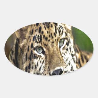 Amur Leopard look forward to love Oval Sticker