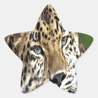 Amur Leopard look forward to love Star Sticker
