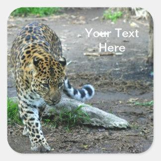 Amur Leopard Square Sticker