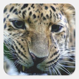 Amur Leopard  Stickers