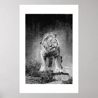 Amur Tiger #3 Poster