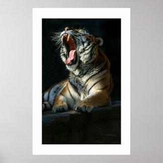Amur Tiger #7-Poster Poster