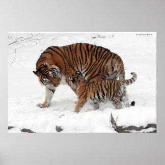 Amur tiger and Cub Poster