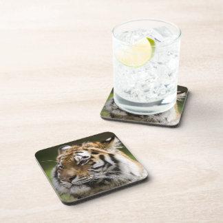 Amur Tiger Coaster