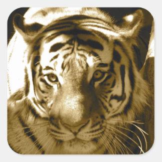 Amur Tiger in Sepia Square Sticker