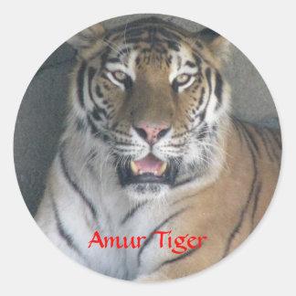 Amur Tiger items Classic Round Sticker