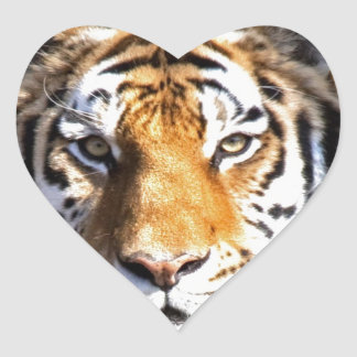 Amur Tiger Look forward to peace and love Heart Sticker