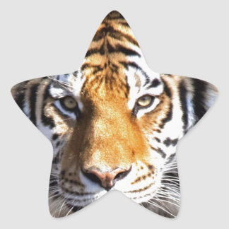 Amur Tiger Look forward to peace and love Star Sticker