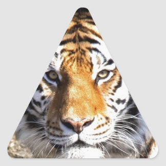 Amur Tiger Look forward to peace and love Stickers