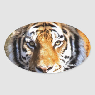 Amur Tiger Look forward to peace and love Sticker