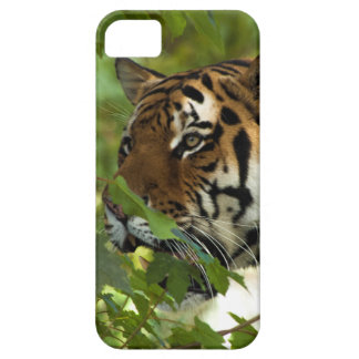 Amur Tiger on the Prowl iPhone SE/5/5s Case